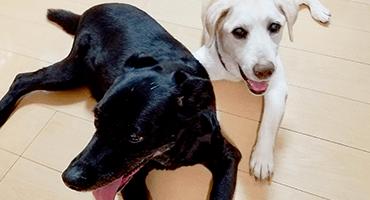 家庭犬しつけ訓練キャピラノ・ドッグ・トレーニング